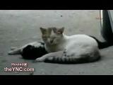 Кошка пытается оживить, Мертвого Друга на Улице